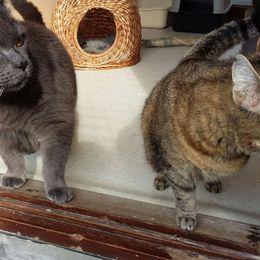 Silly's Cats And Dogs -  Herk-De-Stad - Kattenhotel